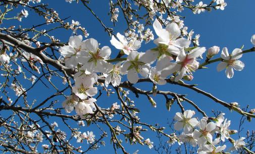 Column: Een nieuwe lente…